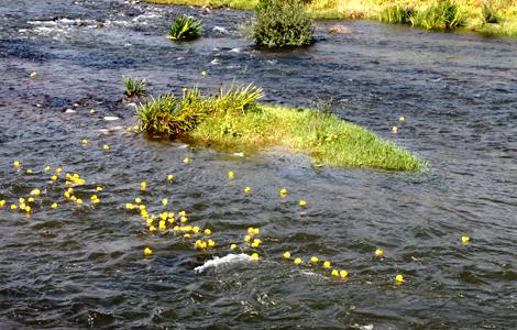 River Rubber Ducky Derby